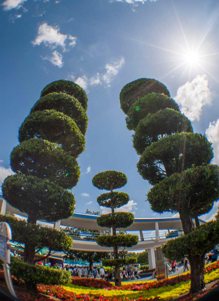 tomorrowland trees